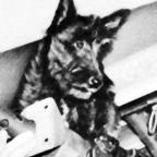 Stuka the Mascot